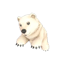 The Polar Pal